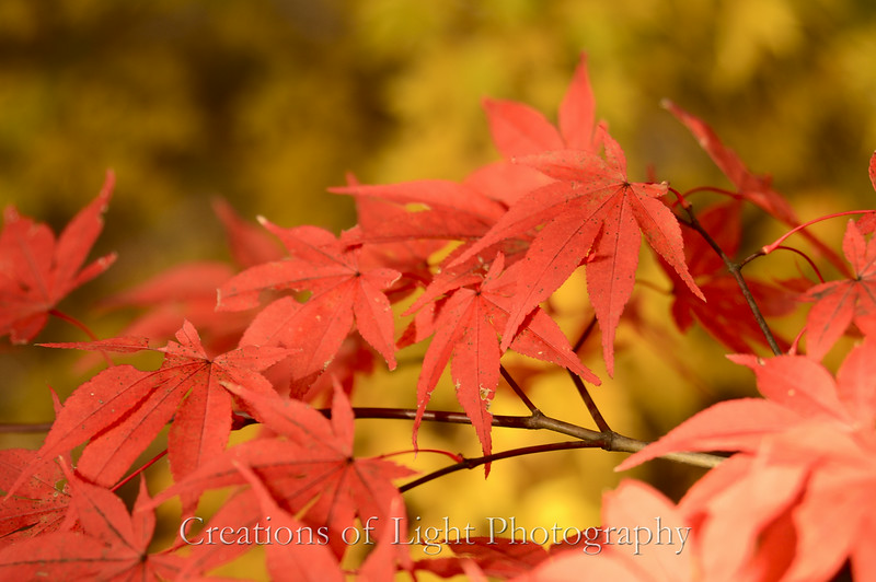 Kyoto in Fall Color  115