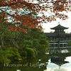 Kyoto in Fall Color  249