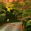 Kyoto in Fall Color  142