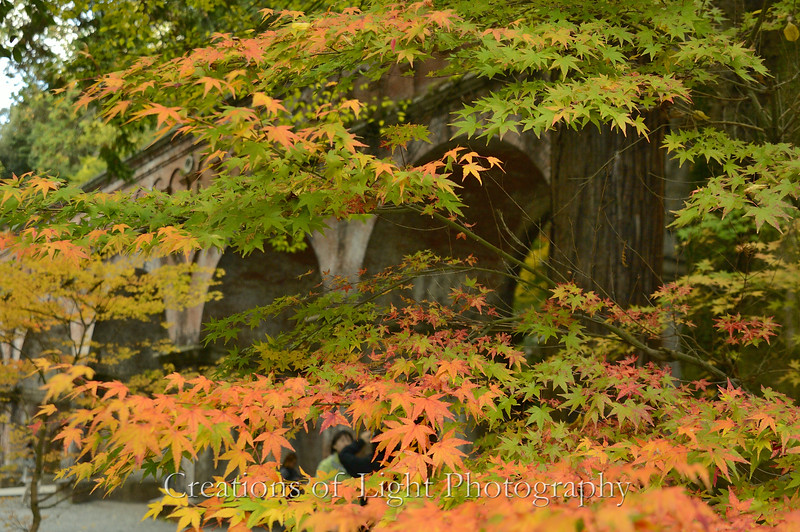 Kyoto in Fall Color  211