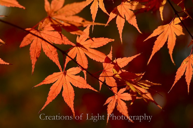 Kyoto in Fall Color  114