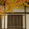 Kyoto in Fall Color 007