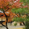 Kyoto in Fall Color 066