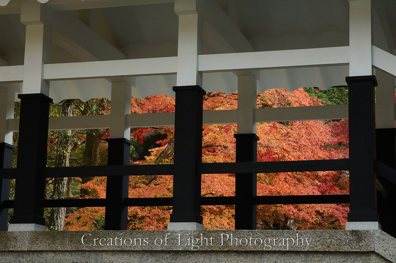 Kyoto in Fall Color 072