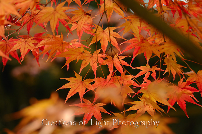 Kyoto in Fall Color 036