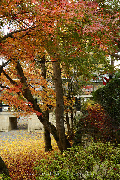 Kyoto in Fall Color 067