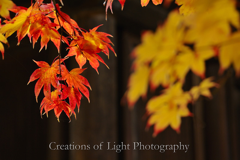 Kyoto in Fall Color 012