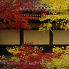 Kyoto in Fall Color 070