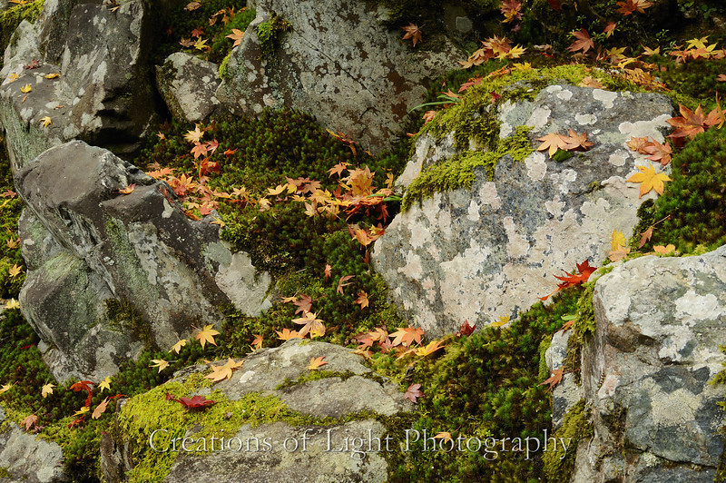 Kyoto in Fall Color 049