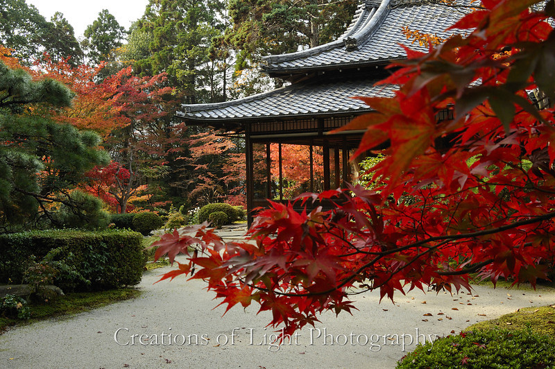 Kyoto in Fall Color 031