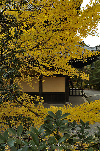 Kyoto in Fall Color 071