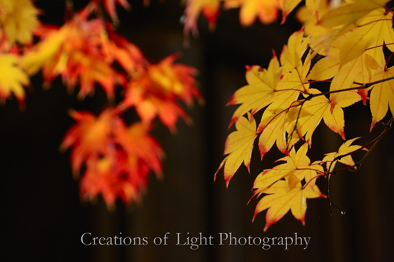 Kyoto in Fall Color 011