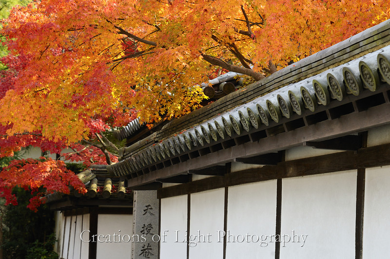 Kyoto in Fall Color 025