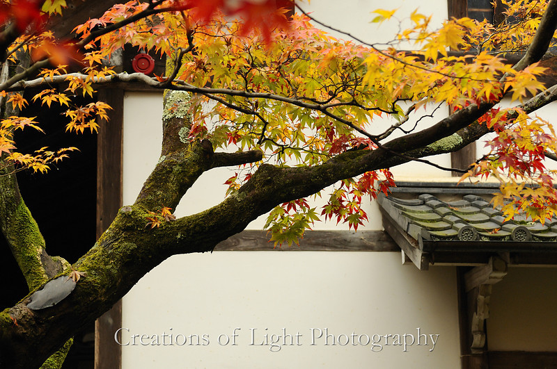 Kyoto in Fall Color 004