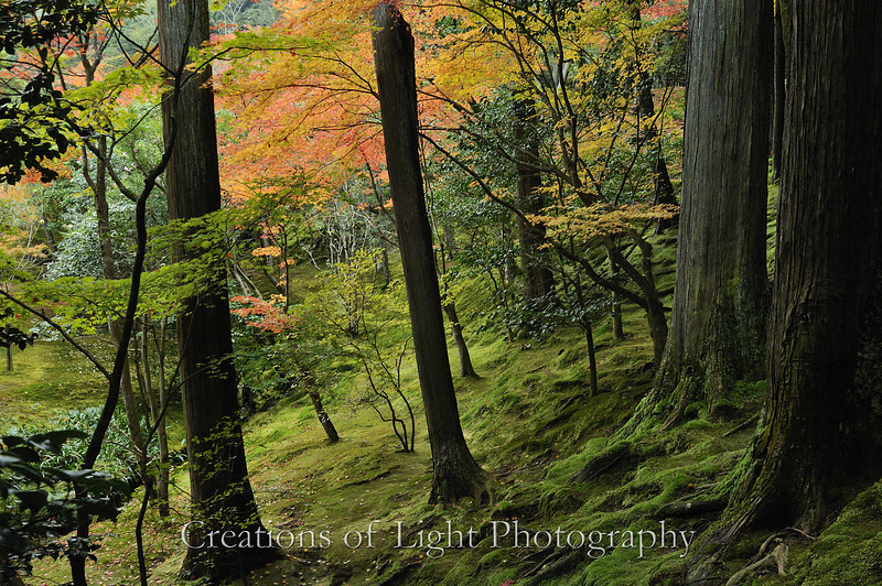 Kyoto in Fall Color 054