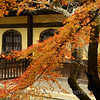Kyoto in Fall Color 065