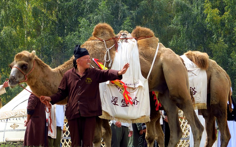 A camel caravan at the World Nomad Games 2016