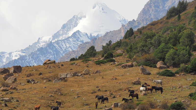 Horses and snow capped mountain peak views during our Issyk-Ata Gorge trekkking adventure in Kyrgyzstan