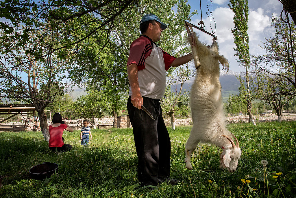 Man working on a slaughtered goat.