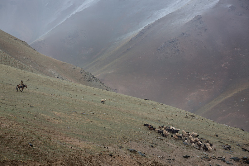 Herder with sheep in the mountain