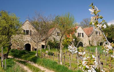 Weinromantik am Kirschblütenweg