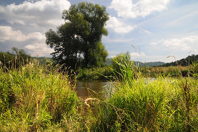 Flusslandschaft unteres Kamptal