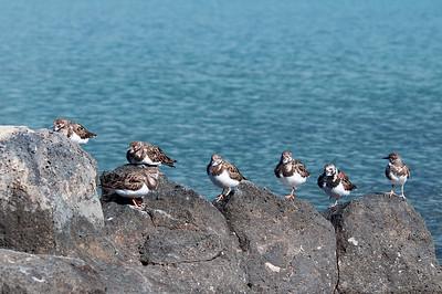 Vögel auf Lava III