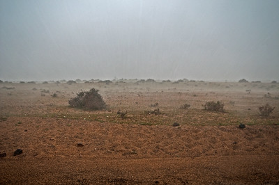 Sturzflut in der Halbwüste