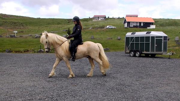 Lýsingur frá Miðkoti