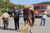 LAFD HORSES PORTER RANCH__19