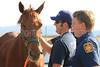 LAFD HORSES PORTER RANCH__09