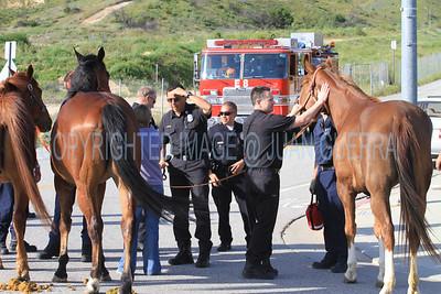LAFD HORSES PORTER RANCH__05