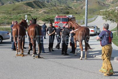 LAFD HORSES PORTER RANCH__29