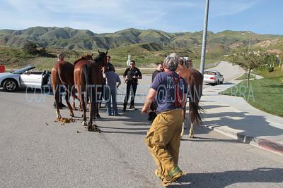 LAFD HORSES PORTER RANCH__31