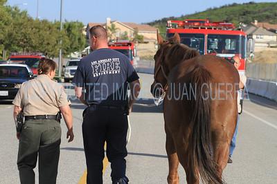 LAFD HORSES PORTER RANCH__17