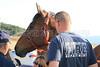LAFD HORSES PORTER RANCH__08