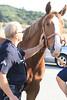 LAFD HORSES PORTER RANCH__07