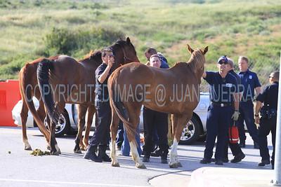 LAFD HORSES PORTER RANCH__03