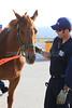 LAFD HORSES PORTER RANCH__11