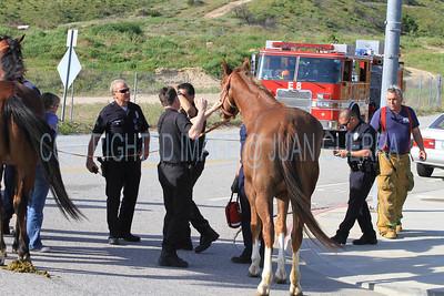 LAFD HORSES PORTER RANCH__04