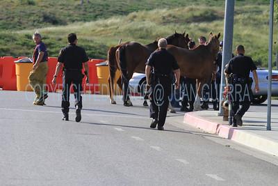LAFD HORSES PORTER RANCH__02