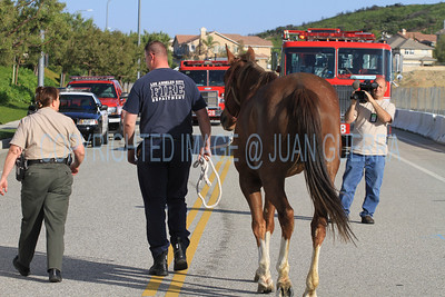 LAFD HORSES PORTER RANCH__18