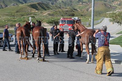 LAFD HORSES PORTER RANCH__30