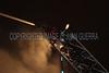 LAFD TITANIUM FIRE__001
