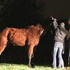 LACOFD_HORSE RESCUE PLACERITA__05