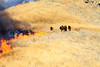 LACoFD NEWHALL BRUSH_002