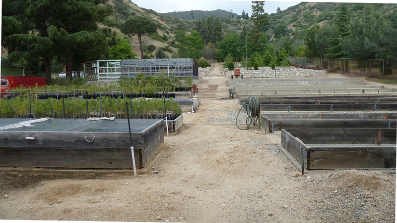 Also, a tree nursery