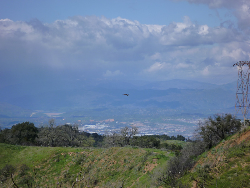 We saw a whole bunch of hawks flying about, including this one that was just hovering in place.
