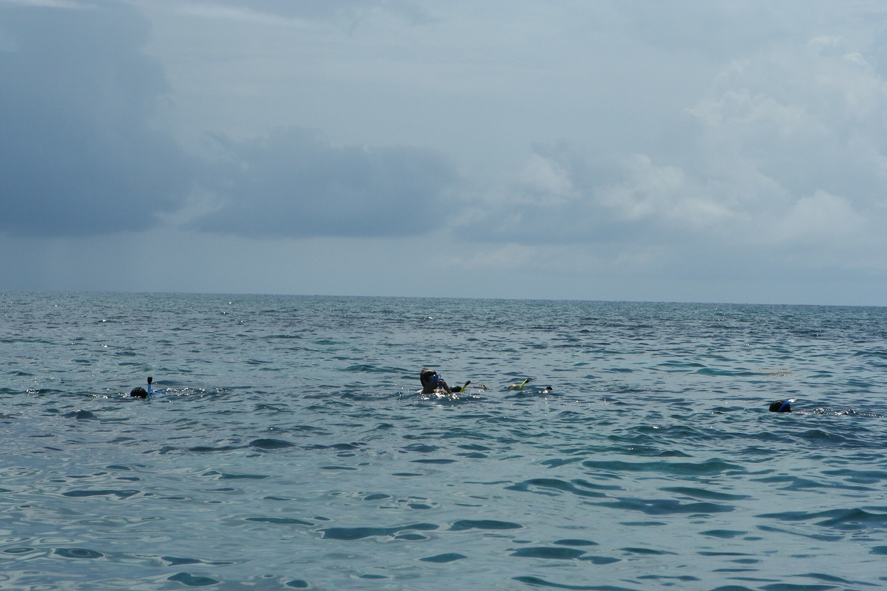 On the way back, everyone decide sto snorkel.