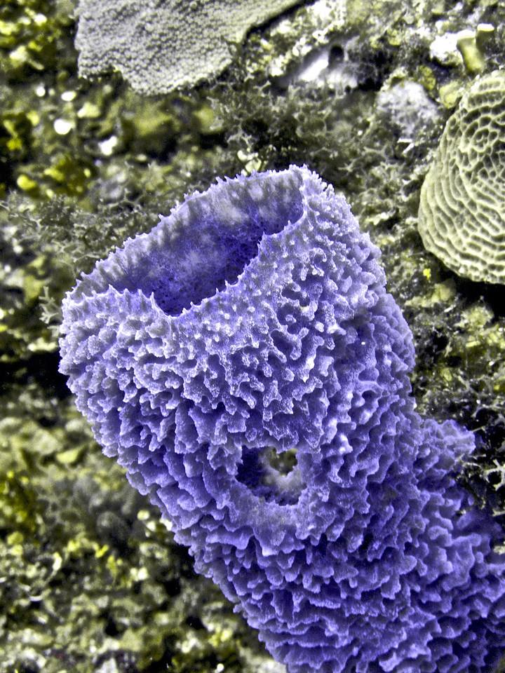Sea sponge.